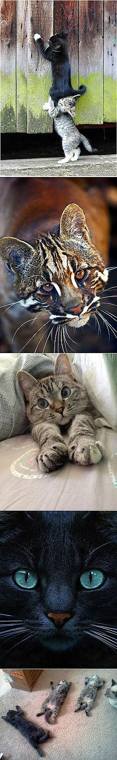 Cats & Other Cute Critters